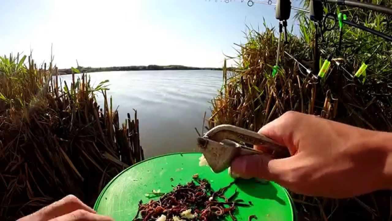 Увеличиваем привлекательность червя для ловли Карася, Леща, Плотвы.Рыбалка.Fishing