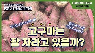 [서울어린이대공원] 어린이 가을 텃밭 체험교실 4편 l 고구마 알아보기썸네일