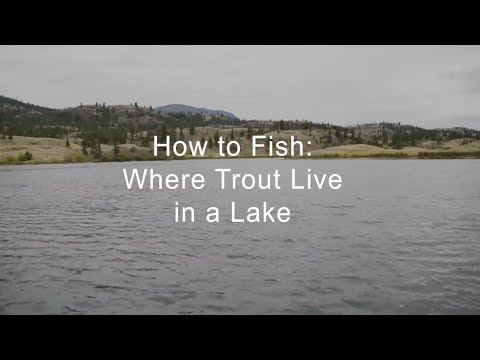 How To Fish: Where Trout Live In A Lake | GoFishBC