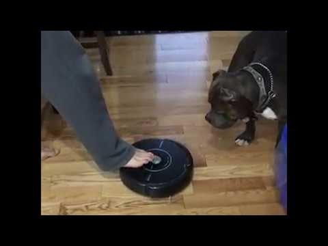 Roomba's Greatest Predator