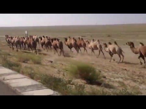Camel Trophy cycling Mongolia