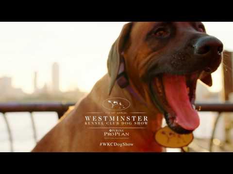Westminster Kennel Club: Rhodesian Ridgeback at the UN