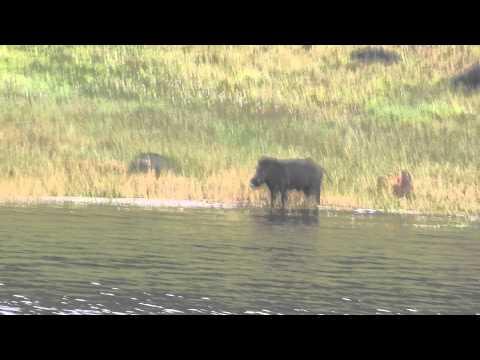 kumeli---the-beautiful-perriyar-lake-and-its-wildlife