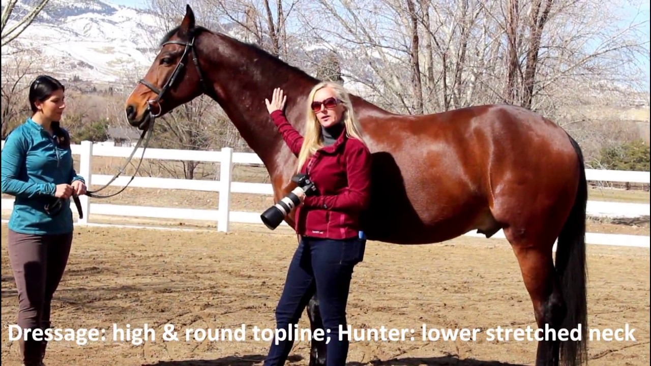 How to take the BEST conformation shot of your horse