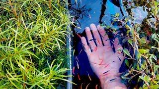 видео Кристально чистая вода