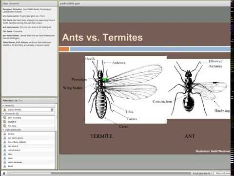 Common Termites of the Southern United States - Biology, Behavior, and Management