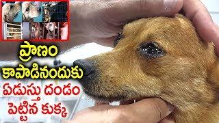ప్రాణం కాపాడినందుకు.. ఏడుస్తు దండం పెట్టిన కుక్క | Man Saves Dog Life | A Dog Real Story | Sumantv