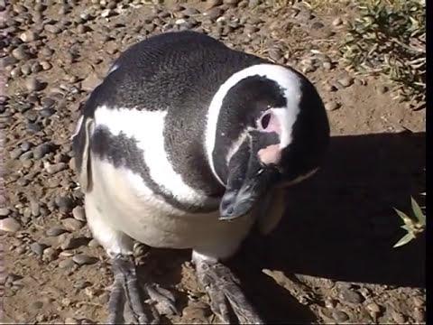 Voyage en Patagonie et en Terre de feu (1e partie) : Argentine
