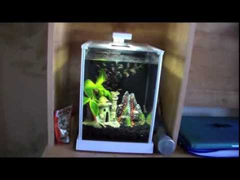 Fluval Spec 2 5 Gallon Aquarium Review Youtube