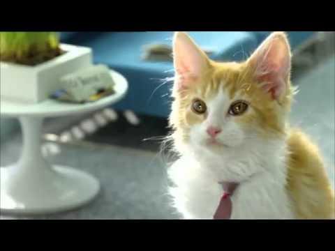 Bouygues Telecom - Les chatons Telecoms