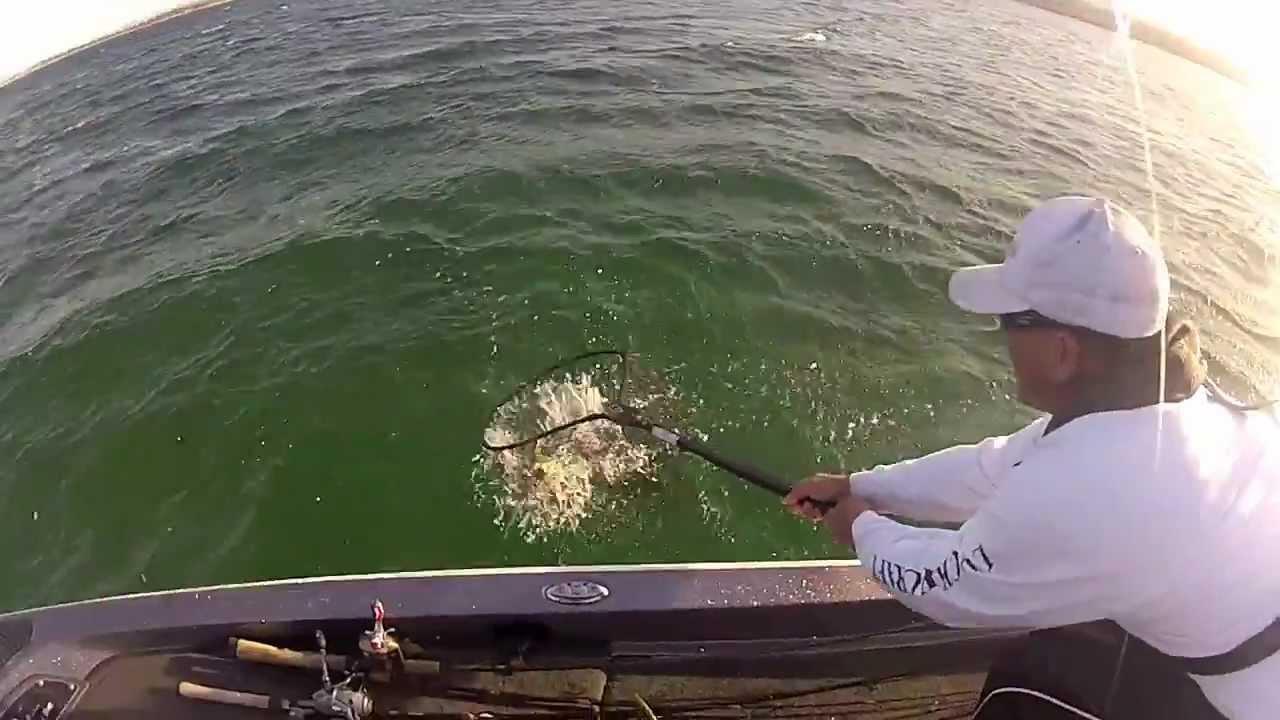 Lake Havasu Tournament Bass Fishing Youtube