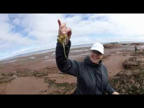 Walking On The Ocean Floor - Low Tide At Burntcoat Head Park, Bay Of Fundy Nova Scotia