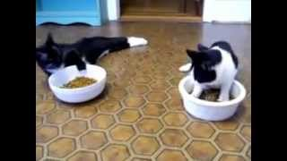 Прикол-коты наркоманы.mp4