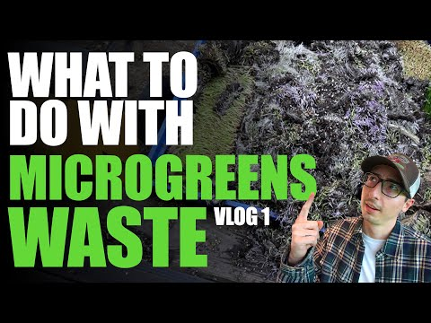 What To Do With Microgreens SOIL/ROOTS/WASTE After Harvest | VLOG 1
