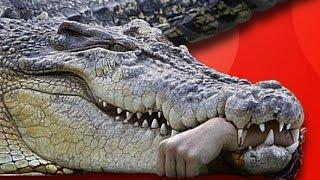 Tehlikeli Hayvanlarla İlgili 43 İlginç Bilgi