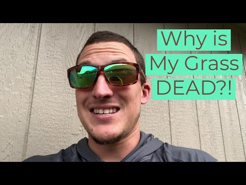 Why the DEAD GRASS???