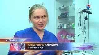 Волонтеры начали акцию по льготной стерилизации