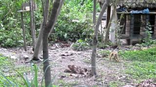 Petit singe curieux