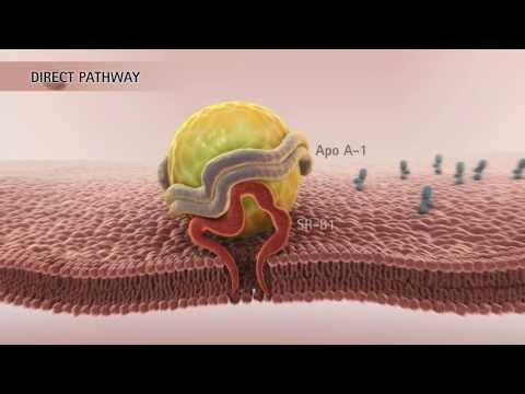 HDL & Reverse Cholesterol Transport [HD]