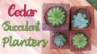Cedar Suculent Planters - Ep 005