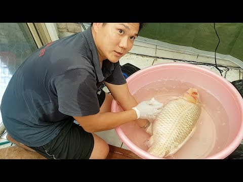 Saving And Treating An Injured Koi Fish That Jumped Out Of A Pond!