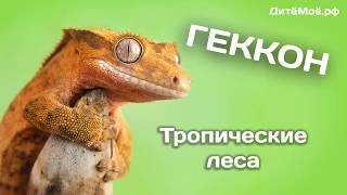 Геккон. Энциклопедия для детей. Тропические животные