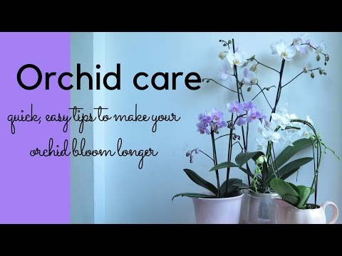 Orchid Care Quick Easy Tips For Looking After Your Orchid