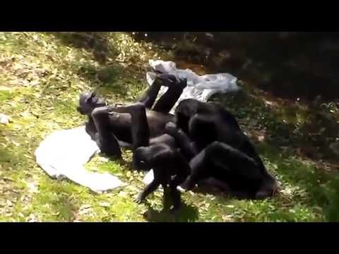 acasalamento de animais tão engraçado