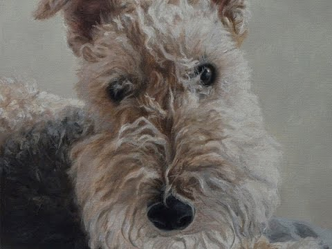 """Dog portrait, oil painting of Lakeland Terrier """"Wilson"""" time-lapse, speed-painting"""