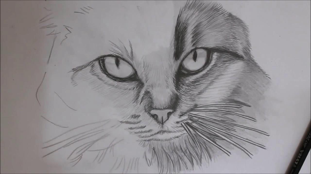 Ritratto a matita di un gatto cats portrait ritratti a - Gatto disegno modello di gatto ...