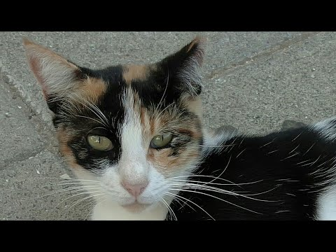 CUTE CATS 😻 CATS EMOJI 😹 КОТ КУКИ 😺 КОТИКИ 🐈 Kucing Lucu 🐱 Gatos graciosos