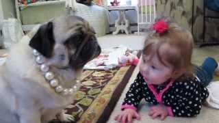 Cute Baby Steals Pug Dogs Necklace While Learning To Crawl