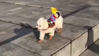 Funny Pet Dog Costumes Douyin Dog Cowboy riding costumes