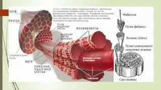Умный Атлетизм 3.1 - Что запускает рост мускулатуры или умная периодизация