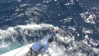 World Sailfish Championship Key West Day 1 & Day 2