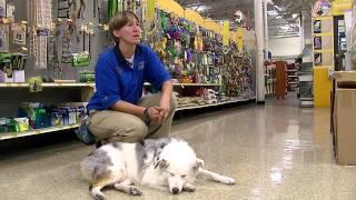 Trained Blind Deaf Dog