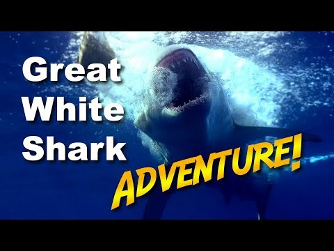 Great White Shark Adventure | JONATHAN BIRD'S BLUE WORLD