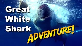 Great White Shark Adventure   Jonathan Bird's Blue World