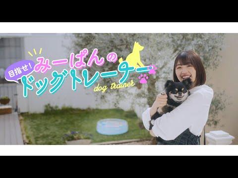日向坂46 佐々木美玲『みーぱんの目指せ!ドッグトレーナー』