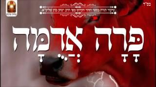 פרה אדומה - שיעור תורה בספר הזהר הקדוש מפי הרב יצחק כהן שליט