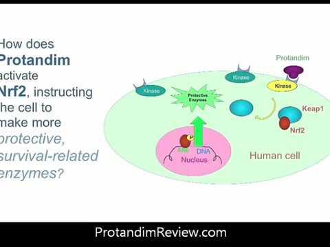Protandim and The Ohio State Heart Study 2