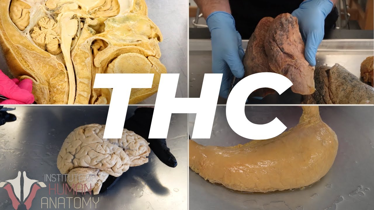Download The Anatomy of THC