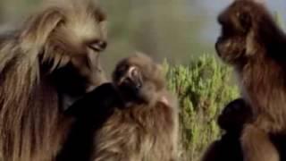 Документальный фильм ББС Человеческая Вселенная