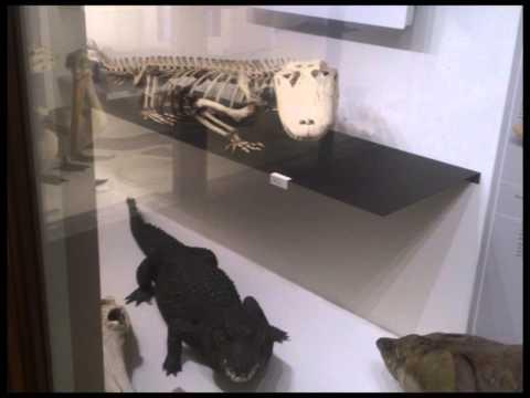 Muséum d'histoire naturelle de Nantes