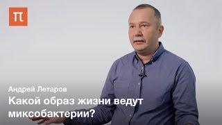 Клеточная дифференцировка у прокариот — Андрей Летаров