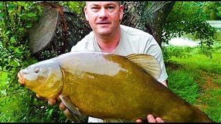 Самая Большая в Мире пойманная Рыба # Линь весом 7.5 кг