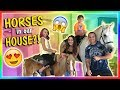 WHY DO WE HAVE HORSES IN OUR HOUSE? | We Are The Davises