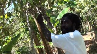 Plantation of Marihuana - Nine Miles - Jamaica