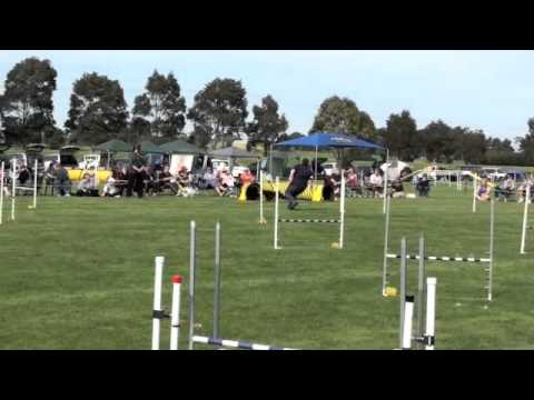State Trial Top Dog Jumping 2011
