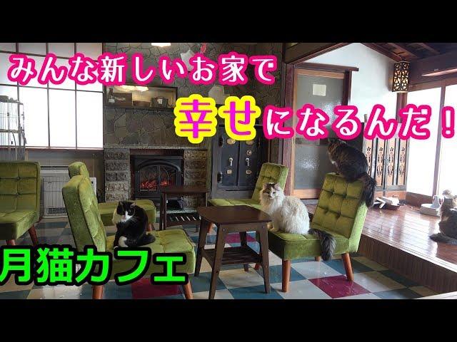 猫さんたちの新しいお家探し 譲渡型保護猫カフェ【月猫カフェ】
